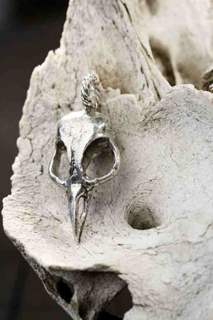 bird skulls